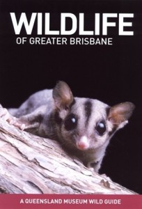 wildlife-of-greater-brisbane